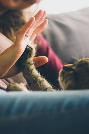 Top Benefits Of Spaying Cats As Soon As Possible