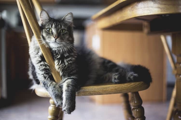 Is Your Cat Obese? Here Is How To Find Out