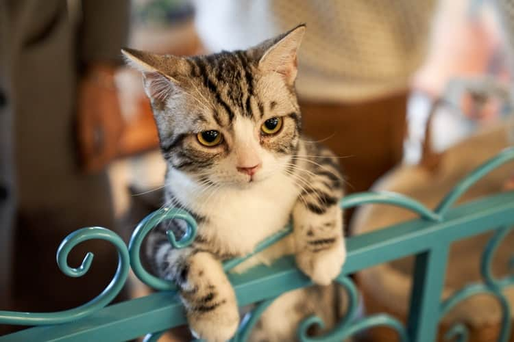 Different Breeds Of House Cats For You