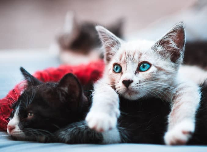 Cat Breeder Facts, Tips, And Tricks (Pt II)