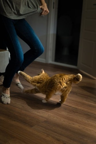 Simple Cat Games To Play With Your Pet