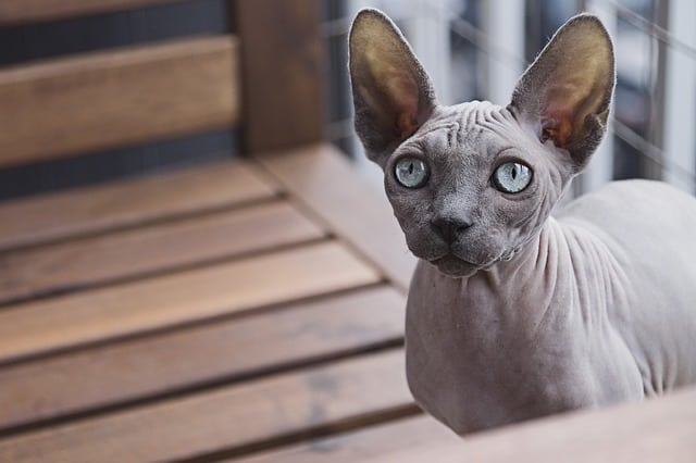 A cat sitting on a bench looking at the camera