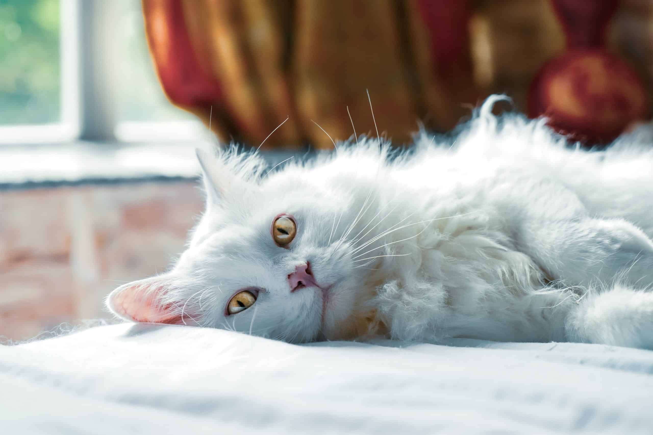 Find Out How To Do The Best Cat Care
