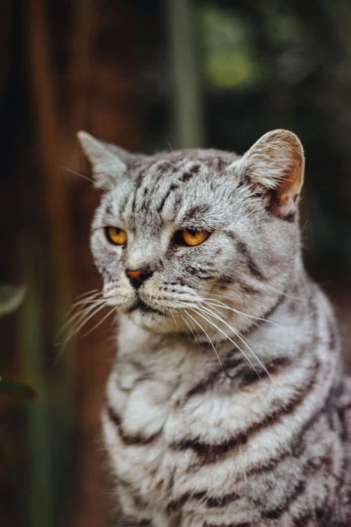 Cat Breeds - Hairless Cats That Look Amazing