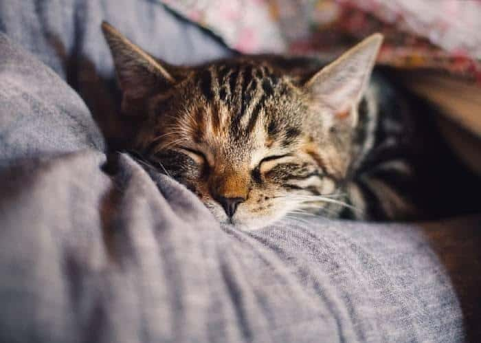 Cats Kneading Behaviour