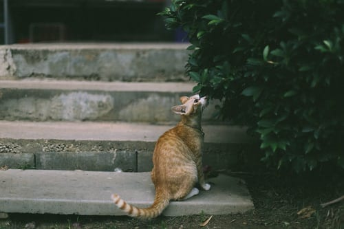 Cat Chasing Tail