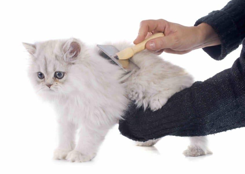 Cat breeds long hair
