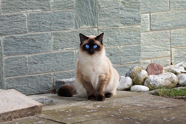 A cat sitting on top of a stone wall