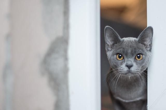 most beautiful cat breeds