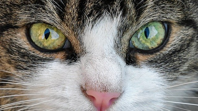 A close up of a cat with green eyes looking at the camera