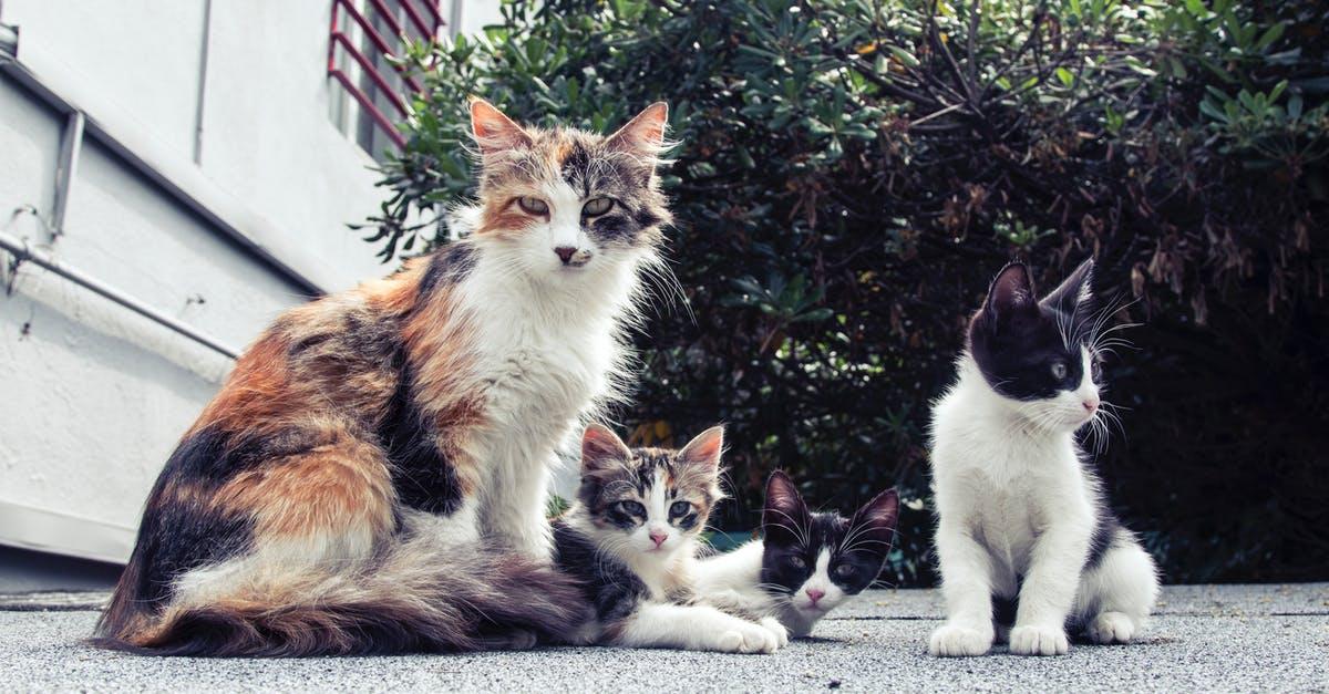 cat breeds list