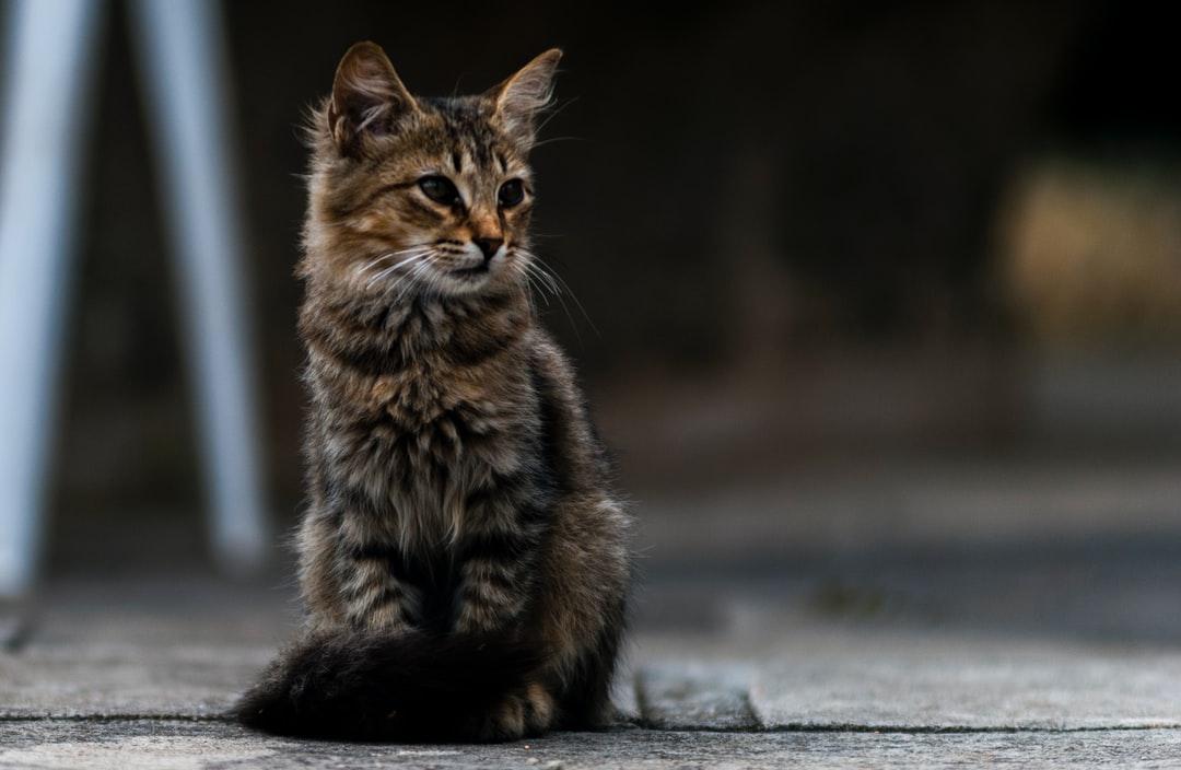 A close up of a cat