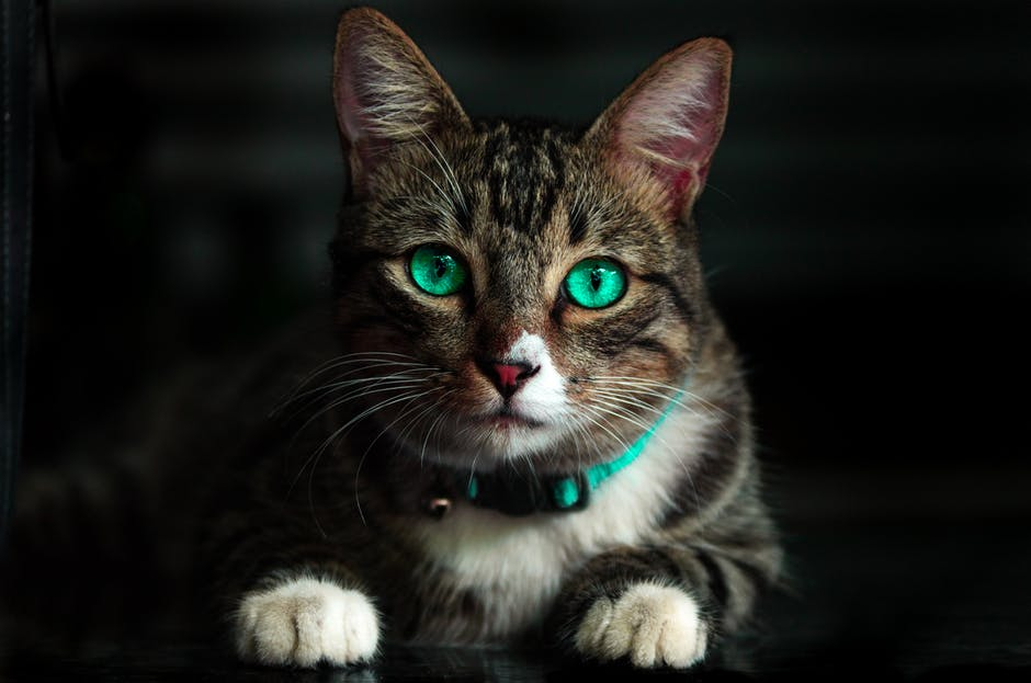 A close up of a cat with green eyes