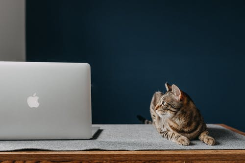 A cat sitting on top of a laptop